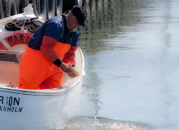 Frischer Butt. Vom Boot in die Pfanne. Ohne Schnickschnack. - Foto: ©Dirk Jürgensen - Düsseldorf